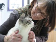 Jeannette Mercier instantly bonded with Mr. Magoo, a cross-eyed Siamese cat found in Basehor two-weeks ago.