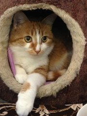 Leticia, a Chieftain Pet of the Week.