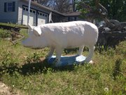 Telesa Tinberg's pig is about to get a makeover; she's thinking of painting it black and white.