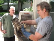 Dale Giar (left) watches as Gary Crain looks at the great horned owl Giar found on the side of a road in Overbrook.
