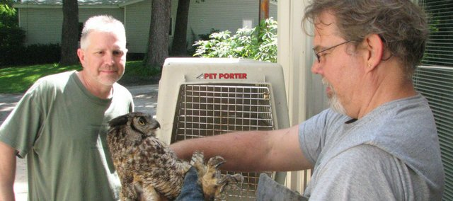 Gary Crain of Operation Wildlife looks at a great horned owl Monday morning found by Dale Giar.