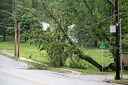 A tree fell into power lines along Nieman Road early Friday.
