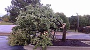 Shawnee Dispatch reader Brian Bolen submitted this photo of tree damage in the Grace Christian Fellowship Church parking lot near 72nd Street and Quivira Road.