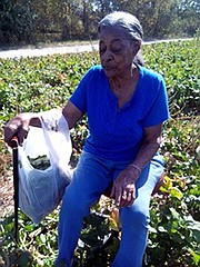 Rose Jean Oliver spent her last day picking greens at Bush Farm last week. Oliver, a lifelong Edwardsville resident, estimates she has been picking greens at Bush Farm for 40 years.