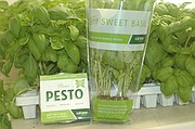 Shoppers might recognize the Cal-Ann Farms sleeve for its living basil (right) as a product they have purchased in a local store; as of Wednesday, the Basehor farm's pesto sauce (left) also should be available in area stores.