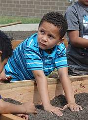 Shawanoe kindergartener Lasean Akers gets his hands dirty while helping build the school's new community garden on May 15.