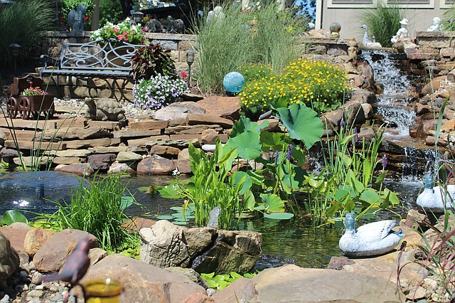 he Dearinger water garden, located in central Shawnee, is being featured on the upcoming Kansas City water garden tour.