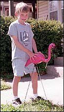 Josh Hoffman has been tending to a flock of flamingos. He is using them to raise money for the American Cancer Society through the upcoming Relay for Life.