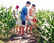 After a busy weekend at the X-Fish Maze, Eudora residents Drew Carnagie, 16, Jesse Montgomery, 15, Joey Donahue, 15, and Kelly Campbell, 16, clear the maze's paths.