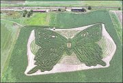"""Butterfly Wishes,"" the corn maze designed by local artist Stan Herd, is located at the Pendleton Farm, just west of Eudora."