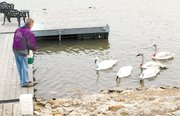 Dave Isabell, who lives on Bear Lake, feeds trumpeter swans off his private boat dock.