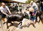 """Rachel Gildner gets a little help in getting """"Miracle,"""" her bucket calf, to jump over a trough of sudsy water during a pre-judging bath last Wednesday morning at the Leavenworth County Fair. The fair concluded on Saturday."""