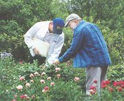 Two of the 20-some members of the Heartland Peony Society who toured Leimkuhler's flower garden on Mothers' Day check out one of the dozens of varieties of peonies cultivated by Leimkuhler. At the left is Leon Pesnell, and to the right is Jim Waddick, the group's founder.