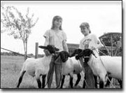 Alisha Ciszewski, 10, left, and her 9-year-old sister, Jennifer, work to hold onto their 4-H sheep. Alishas Opey and Olive and Jennifers Barley and Buckwheat will be shown at the 2000 Leavenworth County Fair in Tonganoxie.