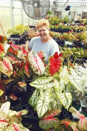 Twila Hickman spends her days now at Countryside Gardens, a greenhouse she and her husband, Jay, have opened in Tonganoxie. The couple moved to Tonganoxie after learning their neighborhood in western Wyandotte County would be used for commercial development.